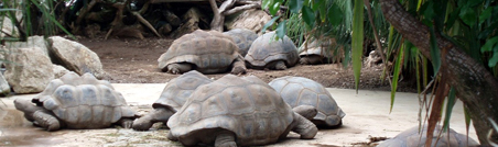 Aldabra, its Giant Tortoises & the Botanical Garden