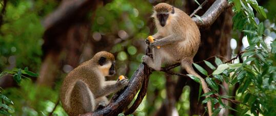 Barbados Wildlife Reserve